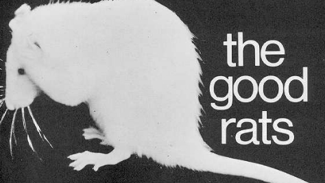 The Good Rats in NYC