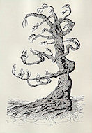 Dead Tree Postcard