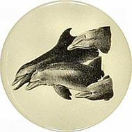 Dolphins - Unanticipated Intelligence Pin