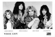 White LionPromo Print