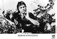 Robyn Hitchcock Promo Print