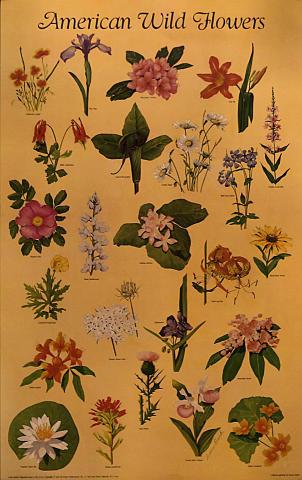 American Wildflowers Poster