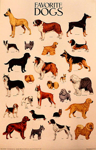 Favorite Dogs Poster