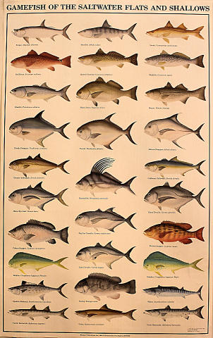 Gamefish of the Saltwater Flats and Shallows Poster