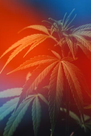 Marijuana Fine Art Print