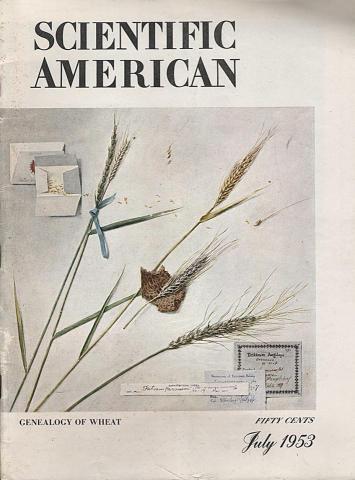 Scientific American