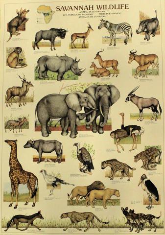 Savannah Wildlife Poster