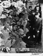 H.P. Lovecraft Promo Print