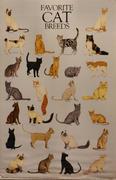 Favorite Cat Breeds Poster