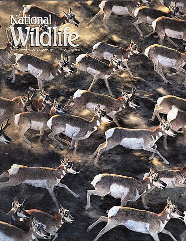 National Wildlife Vol. 30 No. 6 Magazine