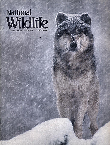 National Wildlife Vol. 31 No. 1 Magazine