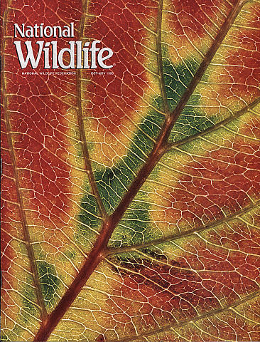 National Wildlife Vol. 31 No. 6 Magazine