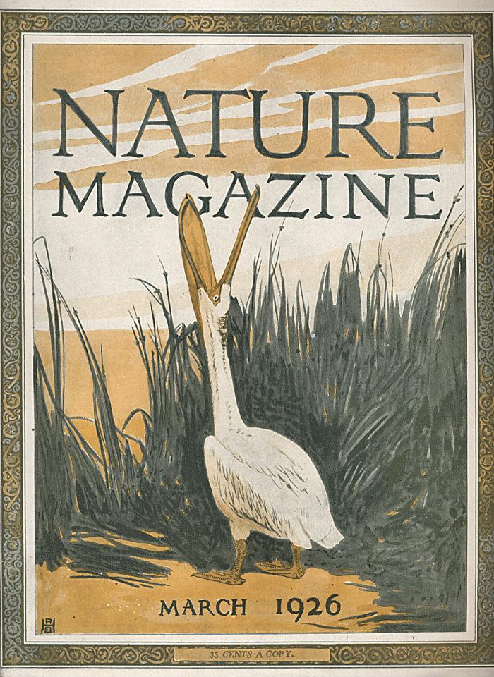 Nature Vol. VII No. 3