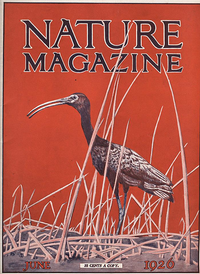 Nature Vol. VII No. 6