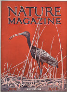 Nature Vol. VII No. 6 Magazine