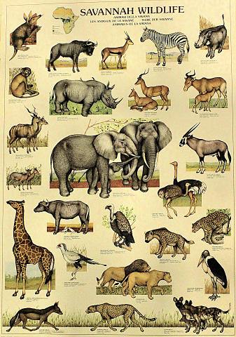 Savannah Wildlife Poster