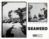 Seaweed Promo Print